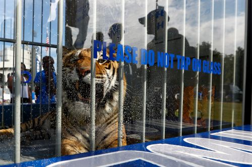 Memphis Tigers' live mascot TOM III dies, ending an era for its sideline mascots