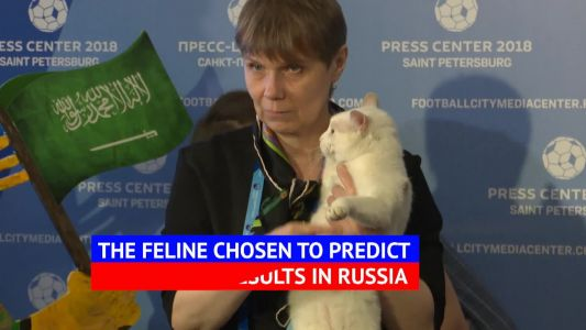 Achilles the World Cup predicting psychic cat