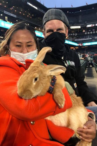 Therapy bunny at ballpark brings smiles and is instant hit