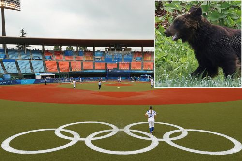 Bear goes wild in Olympic stadium, is still on the loose